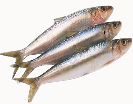 Importancia de consumir sardina