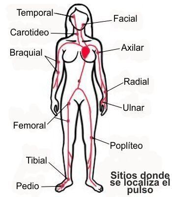 Zonas o regiones donde se localiza el pulso en el cuerpo humano